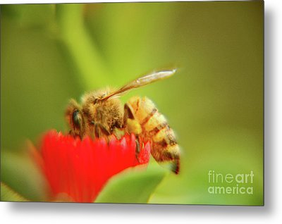Metal Print featuring the photograph Worker Bee by Micah May