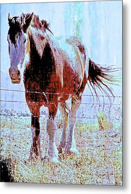 Metal Print featuring the photograph Workhorse by Cynthia Powell