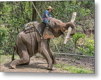 Metal Print featuring the photograph Working Elephant by Wade Aiken