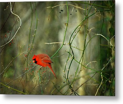 World Of Fire And Dew Metal Print