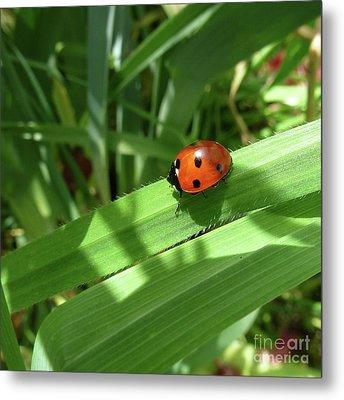 World Of Ladybug 1 Metal Print by Jean Bernard Roussilhe