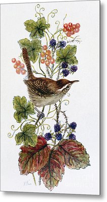 Wren On A Spray Of Berries Metal Print by Nell Hill
