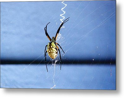 Writing On The Web Metal Print by Renee Cain-Rojo