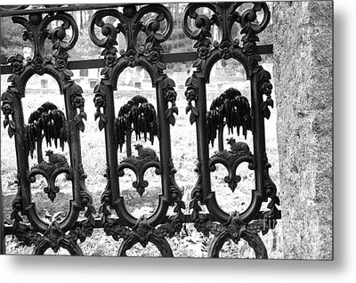Wrought Iron Gate -west Epping Nh Usa Metal Print by Erin Paul Donovan