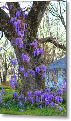 Wysteria Tree Metal Print