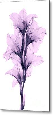 X-ray Of A Gladiola Flower Metal Print
