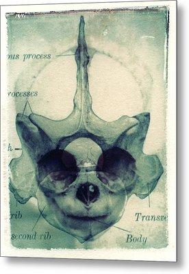 X Ray Terrestrial No. 13 Metal Print by Jane Linders