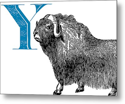 Y Yak Metal Print by Thomas Paul