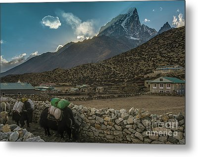 Metal Print featuring the photograph Yaks Moving Through Dingboche by Mike Reid