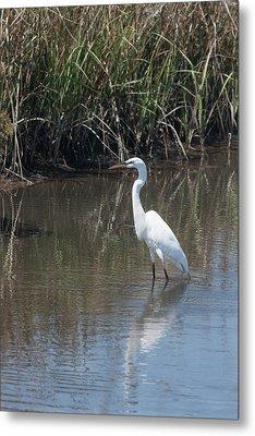 Yawkey Wildlife Refuge - Great White Egret II Metal Print by Suzanne Gaff