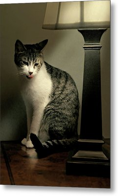 Year Of The Cat Metal Print by Diana Angstadt