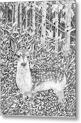 Yearling Metal Print by Lawrence Tripoli