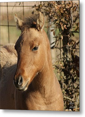 Yearling Metal Print by Rick Friedle