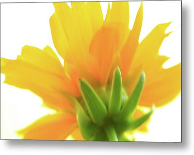 Metal Print featuring the photograph Yellow And Green by Roger Mullenhour