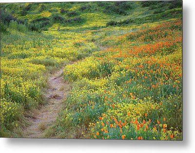 Metal Print featuring the photograph Yellow And Orange Wildflowers Along Trail Near Diamond Lake by Jetson Nguyen