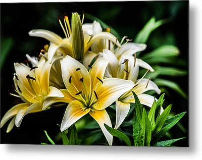 Yellow And White Lilys Metal Print