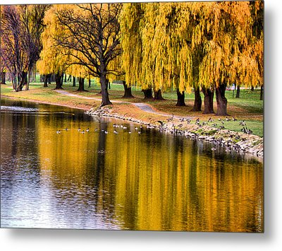 Yellow Autumn Metal Print
