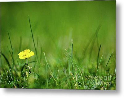Metal Print featuring the photograph Yellow Beauty by Kennerth and Birgitta Kullman