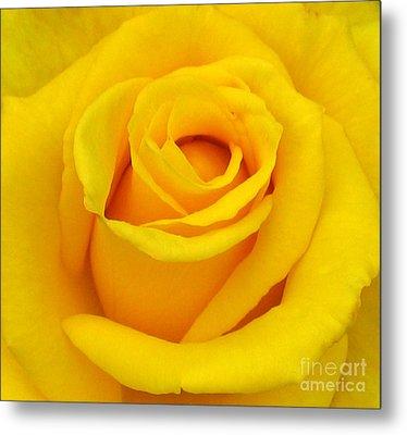 Yellow Beauty Metal Print by Mg Blackstock