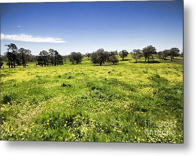 Metal Print featuring the photograph Yellow Blanket by Douglas Barnard