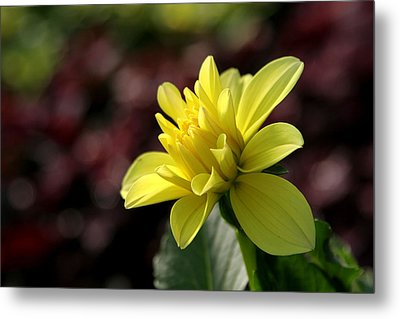 Yellow Bloom Metal Print