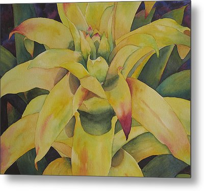 Yellow Bromeliad Metal Print by Judy Mercer