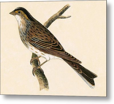 Yellow Browed Bunting Metal Print by English School