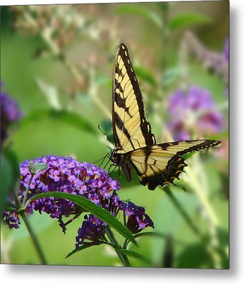 Yellow Butterfly On Purple Metal Print