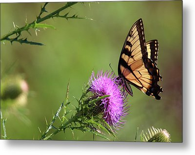Yellow Butterfly Metal Print by Pete Tapang