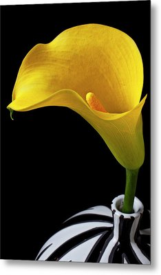 Yellow Calla Lily In Black And White Vase Metal Print