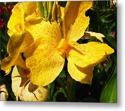 Yellow Canna Lily Metal Print by Shawna Rowe