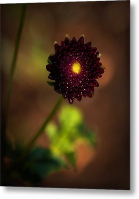 Metal Print featuring the photograph Yellow Center by Cherie Duran