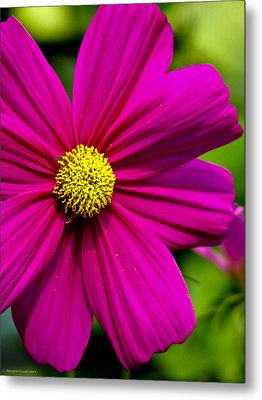 Yellow Center Metal Print by Ches Black