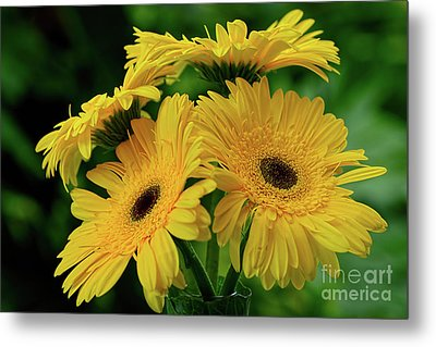 Metal Print featuring the photograph Yellow Chrysanthemums By Kaye Menner by Kaye Menner