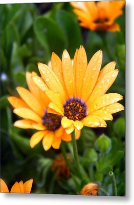 Yellow Colored Petals Metal Print