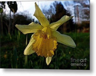 Yellow Daffodils 5 Metal Print by Jean Bernard Roussilhe