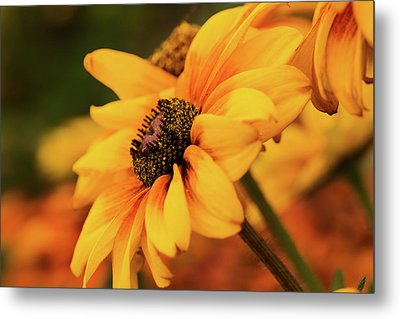 Metal Print featuring the photograph Yellow Dark by Mary Jo Allen