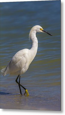 Yellow Feet Metal Print by Marvin Spates