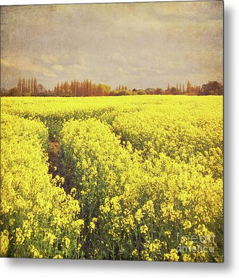 Yellow Field Metal Print by Lyn Randle