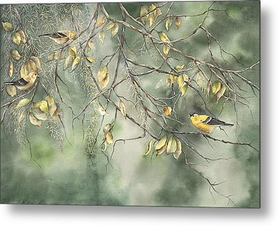 Yellow Finch Metal Print