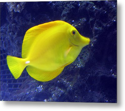 Metal Print featuring the relief Yellow Fish by Suhas Tavkar