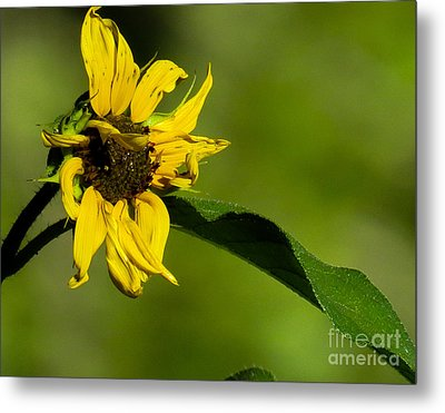 Yellow Flower 1 Metal Print