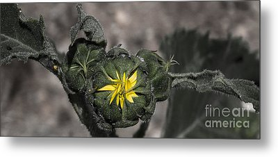 Yellow Flower 3 Metal Print