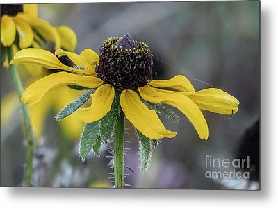 Yellow Flower 6 Metal Print