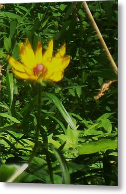 Yellow Flower Metal Print by Eric  Schiabor