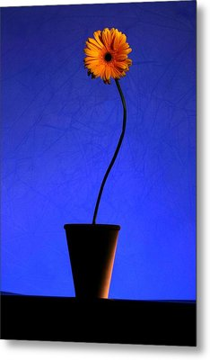 Metal Print featuring the photograph Yellow Flower by Riana Van Staden