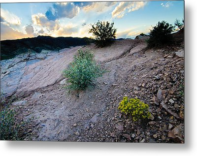 Yellow Flower Sunset, Fort Collins, Colorado Metal Print by Preston Broadfoot