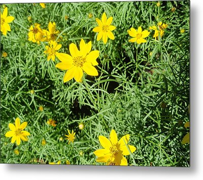 Metal Print featuring the photograph Yellow Flowers by Beth Akerman