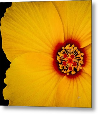 Yellow Hibiscus Squared Metal Print by TK Goforth