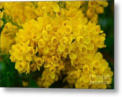 Yellow Is The Joy Of Spring Metal Print by Debra Banks